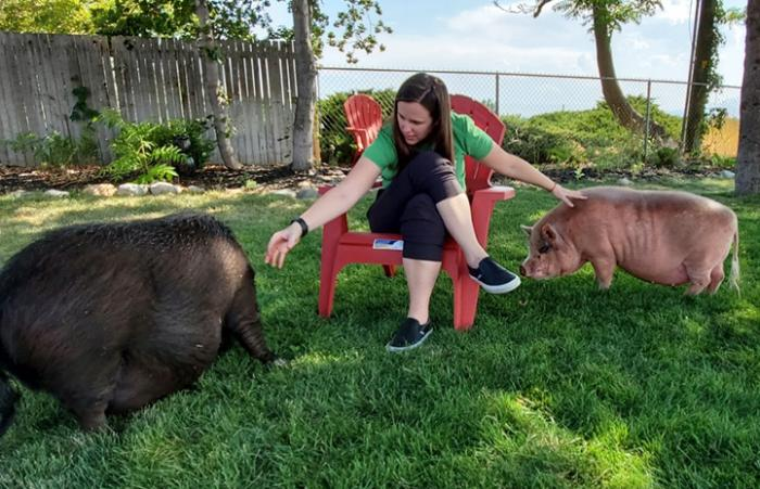 Jennifer outside sitting on a chair reaching out to Papa and Diesel the pigs