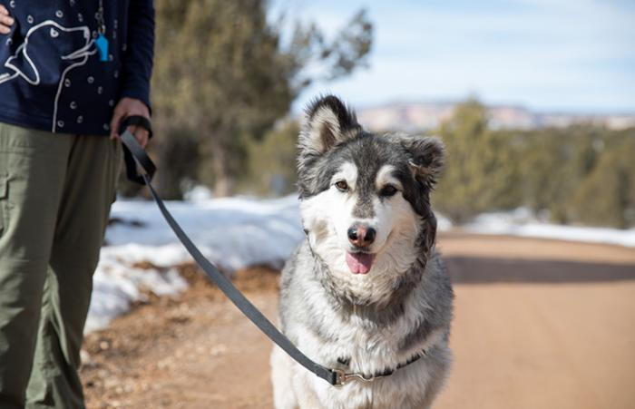 Person walking a husky type dog outside surrounded by snow