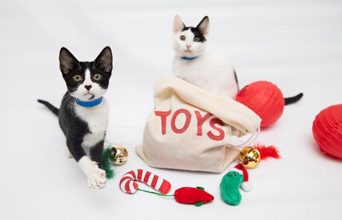 Two kittens playing with a sack of toys