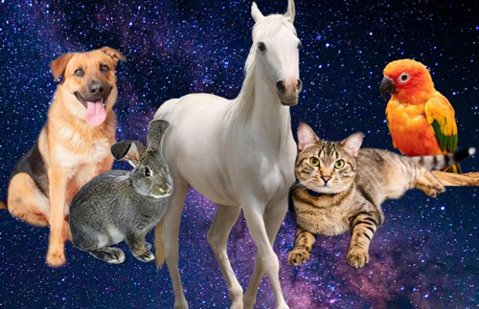 A dog, rabbit, horse, cat and parrot floating in space together
