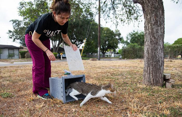 Woman releasing a community cat from a box as part of TNR