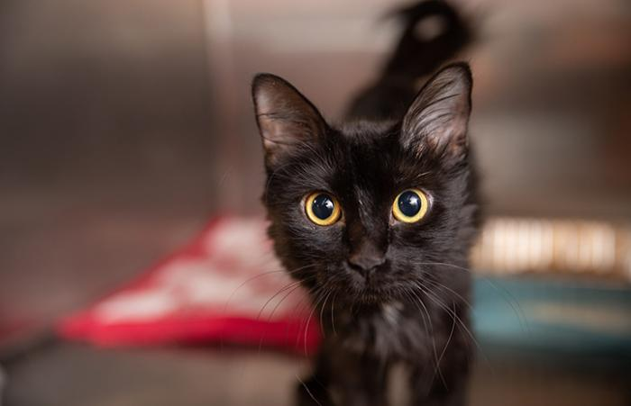 Black cat in a kennel