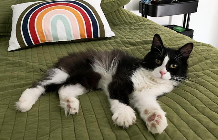 Itty Bitty the black cat lying on a bed with a green bedspread and a rainbow pillow