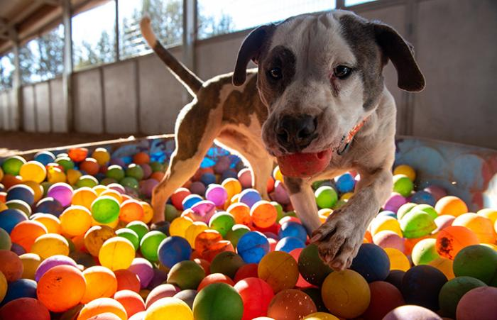 Pilsner the dog in the ball pit
