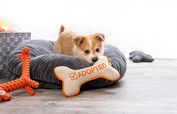 Puppy in a bed chewing on a bone-shaped toy that says, Adopted