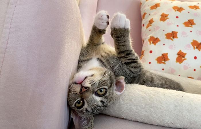 Catlin the kitten lying upside-down on a couch with her paw in the air