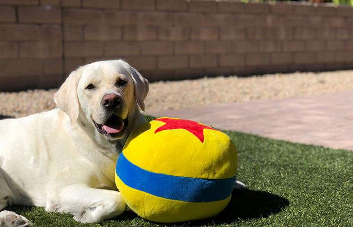 Cosmic Charlie the dog out on the lawn with a stuffed Pixar ball toy