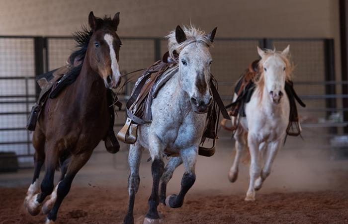 Group of saddled horses running in an arena