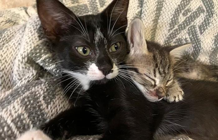Black and white kitten lying next to a tabby kitten who is sleeping on his back