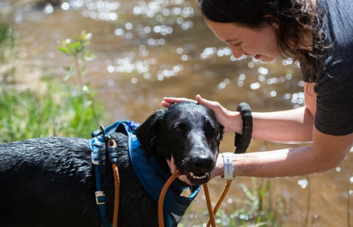 Person petting a dog next to a creek