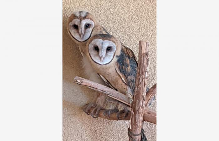 Mother owl and baby owl sitting on a branch