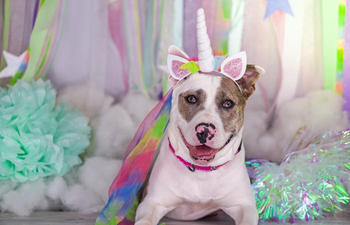 Smiling dog wearing a colorful tutu and unicorn horn