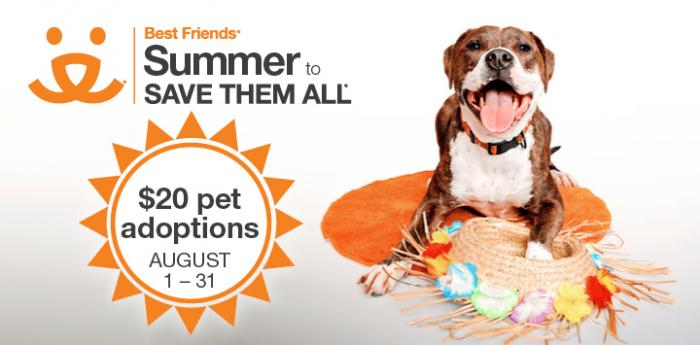 Summer to Save Them All August adoption promotion with a dog