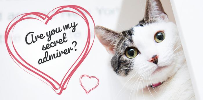 """White and tabby cat with a heart that says, """"Are you my secret admirer?"""""""