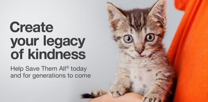 Create your legacy of kindness by helping kittens like this cute one through planned giving.