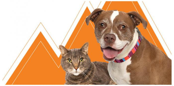 Cat and dog in front of some orange peak-type graphics