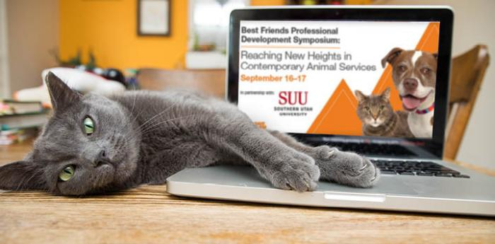 Gray cat lying on a laptop computer that is open to a screen showing the SUU Best Friends Professional Development Symposium pg