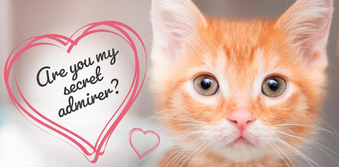 Orange tabby kitten with heart graphic with the words, Are you my secret admirer?