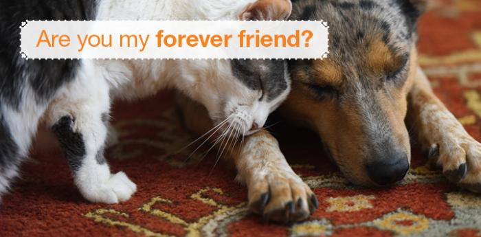 Cat rubbing up against a dog with the text, Are you my forever friend?