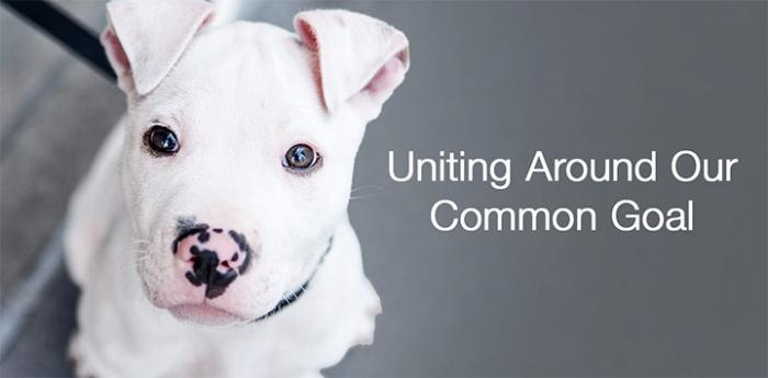 "Poster with cute white pit bull puppy with message that says ""Uniting around our common goal"""