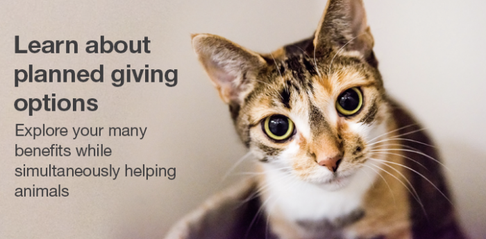 Calico cat looking at camera with text about planned giving options