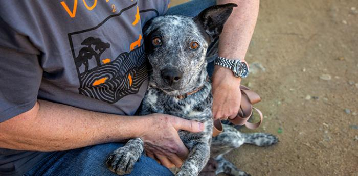 Person squatting down and hugging a heeler type dog