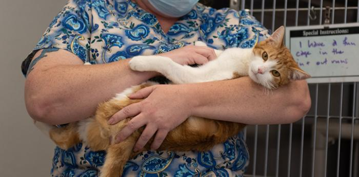 Person holding an orange tabby and white cat cradled in her arms