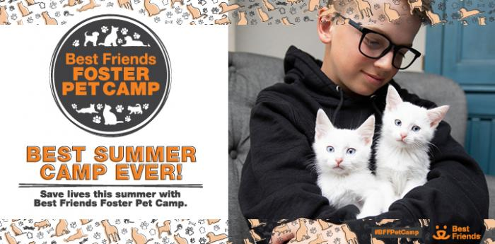Young boy wearing glasses and wearing a sweatshirt and holding two white kittens with promotion for Best Friends Foster Pet Camp