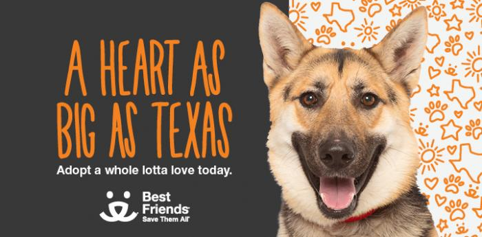Sheperd picture next to text, A heart as big as Texas, Adopt a whole lotta love today with Best Friends logo