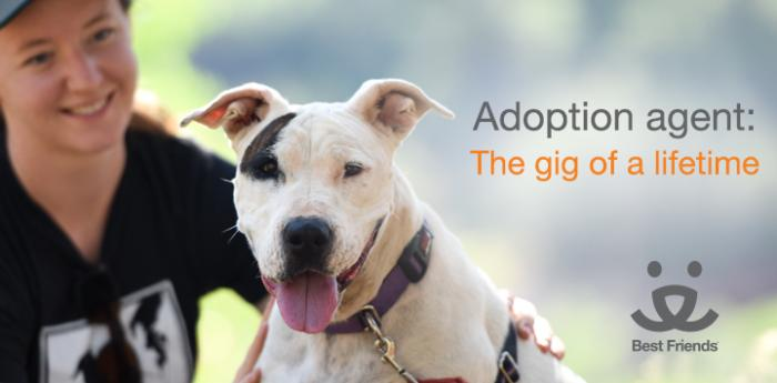 Adoption agent: the gig of a lifetime dog version