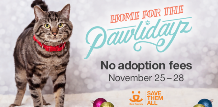 Zappos Home for the Pawlidayz