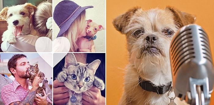 Small terrier mix dog in front of a microphone next to a collage of four animal/people pics with a heart graphic