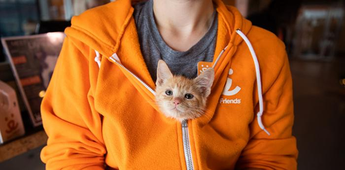 cat nestled in an orange sweatshirt