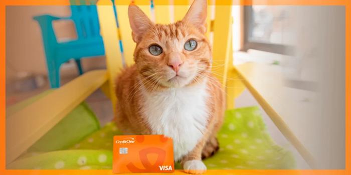 Orange tabby cat sitting on a green mat on a yellow chair with the Best Friends credit card from Credit One Bank in front of him