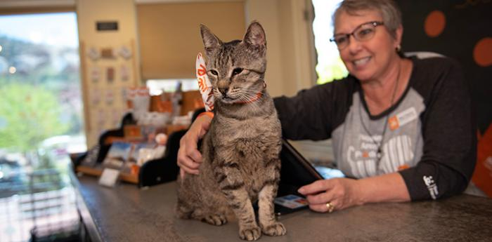 Woman petting a brown tabby cat on the counter at the Best Friends Sanctuary Store