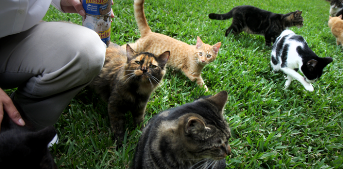 Person kneeling to feed cats in grass