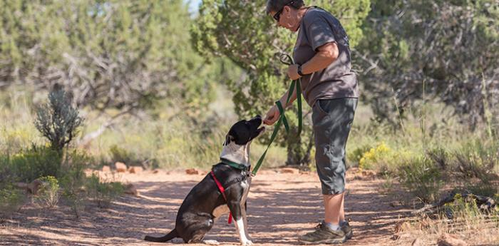 Volunteer giving training to a dog while out on a walk