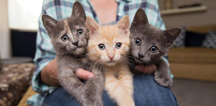 Person holding litter of three kittens