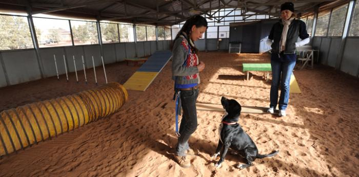 Woman using relationship-based dog training with her dog through positive reinforcement in dog training class (workshop)