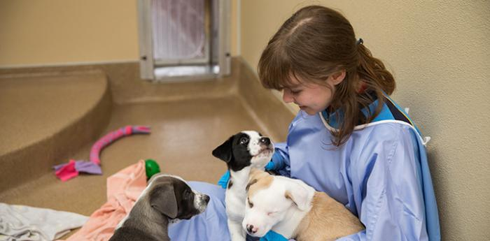 Female intern wearing a protective gown with three puppies on her lap