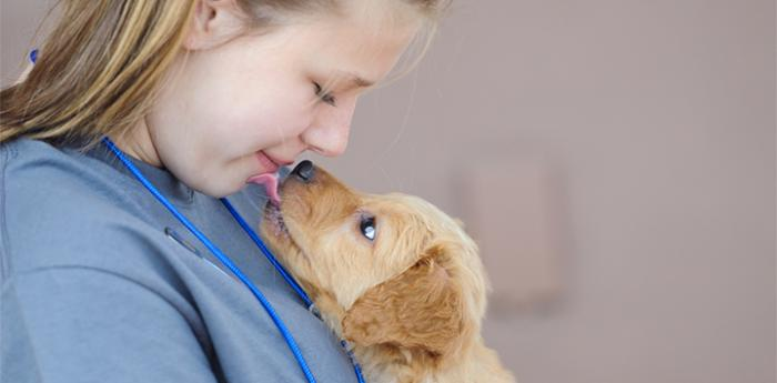 Young girl looking down at a golden retriever type puppy