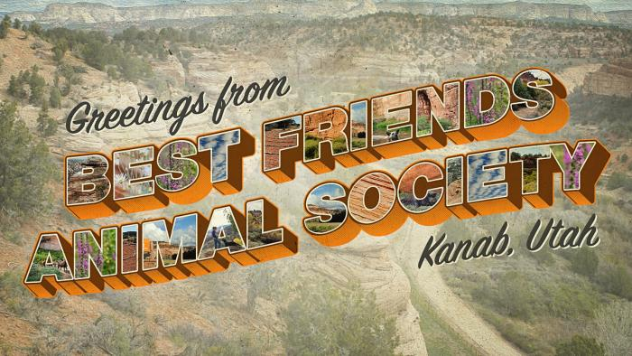 Postcard from Best Friends Kanab UT