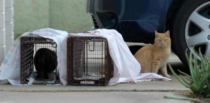 Help cats like these two outdoor cats by volunteering with TNR efforts. Be a cat volunteer.