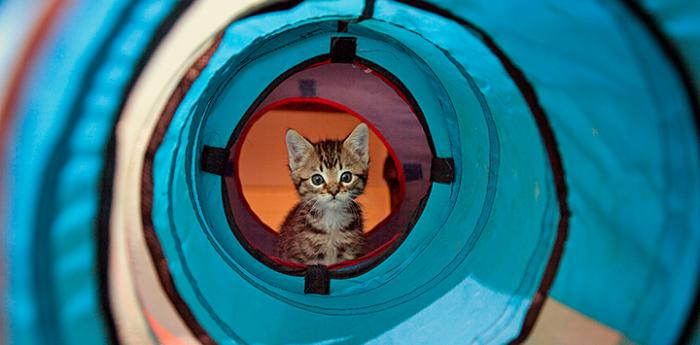 Brown tabby kitten with blue tube