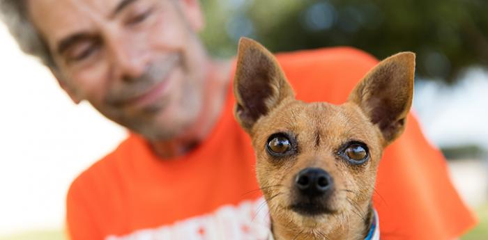Brown Chihuahua looking at the camera with a smiling man in an orange Best Friends volunteer T-shirt behind him