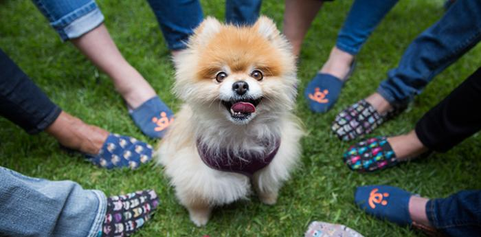 Pomeranian dog surrounded by people wearing BOBS FOR DOGS shoes