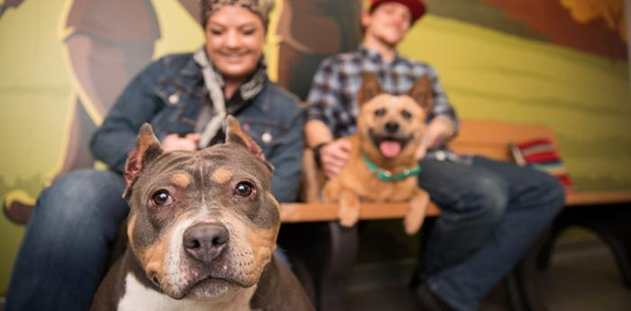 Muffin the pitbull terrier getting adopted