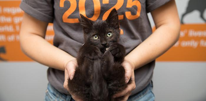 Person holding a black kitten cupped in her hands