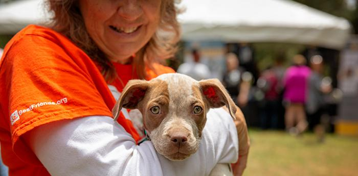 Woman in an orange Best Friends volunteer T-shirt holding a little red and white heeler puppy