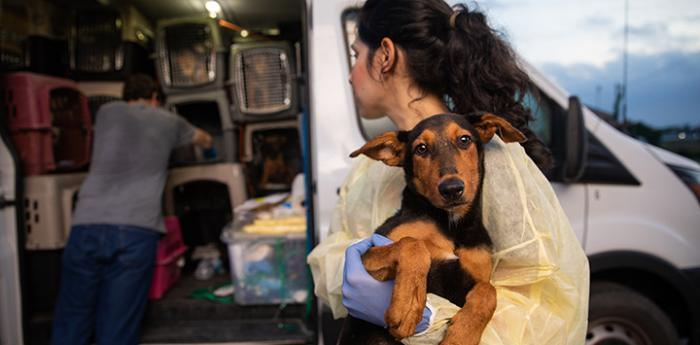 Woman holding a brown and black puppy next to a transport van full of crates